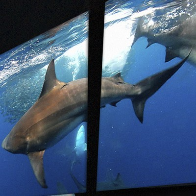 Arizona Science Center Opens Immersive Shark Exhibition